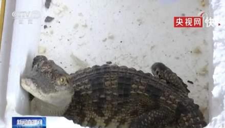 Ребенок заказал в интернет-магазине рыбку, а получил живого крокодила