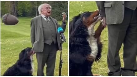 Пёсик президента Ирландии не давал ему произнести речь, потому что хотел играть