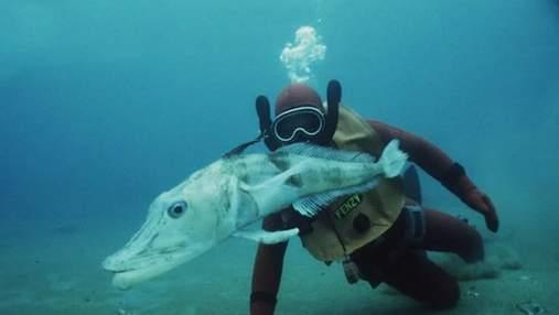 Уникальная ледяная рыба:  единственное в мире животное, у которого прозрачная кровь
