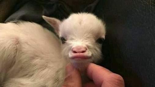 Лекарство от плохого настроения: 45 забавных фото животных, которые сделают ваш день лучше