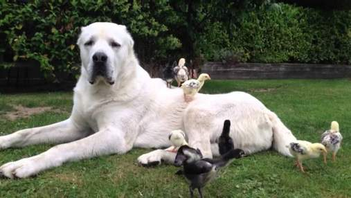 Хаски, лабрадоры, таксы: 23 популярных породы собак, которые не смогут жить в квартире