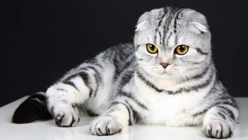 10 пород кошек, за которыми очень сложно ухаживать