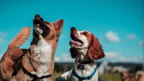 Яка порода собак підходить вам: пройдіть тест та дізнайтеся
