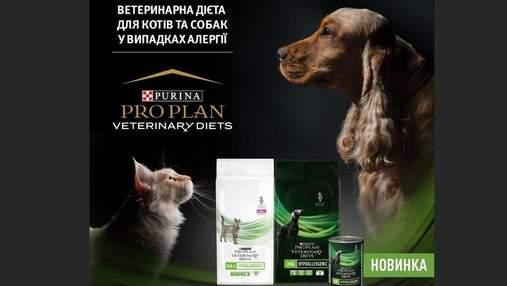 Чим годувати собак та котів, схильних до харчової алергії