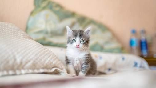Перші кроки кота в новому будинку: як підготуватися господарю