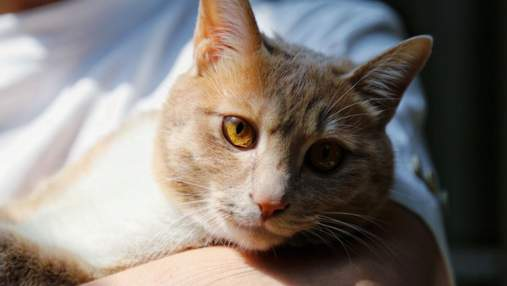 11 фактів про котів, які ви не знали