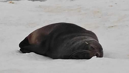 Десант морських котиків висадився біля українських полярників