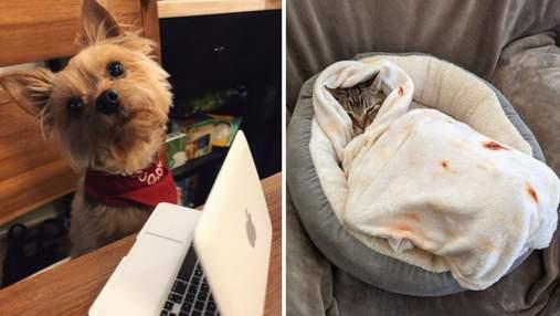 Люди купили своїм собакам та кішкам кумедні товари: фото