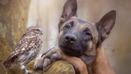 Лучшие друзья: в Германии собака воспитывает сову – милые фото