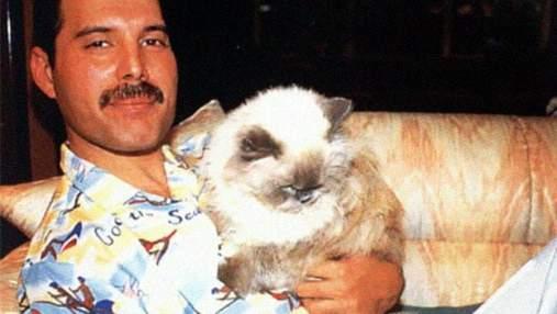 Кошачья рапсодия: трогательные фото Фредди Меркьюри и его котиков