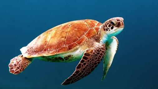 Всемирный день черепахи: почему важно защищать этих животных