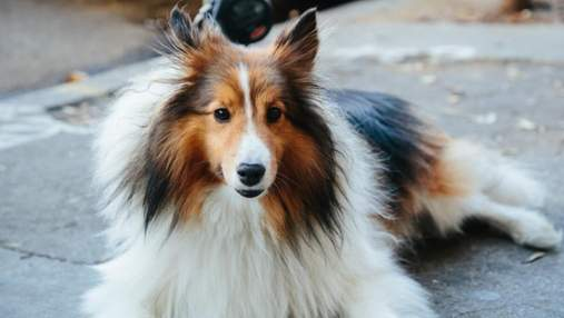 Назвали наиболее и наименее агрессивные породы собак