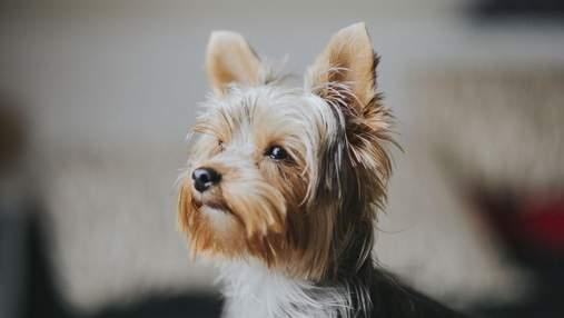 Для ленивых: породы собак, с которыми не нужно гулять