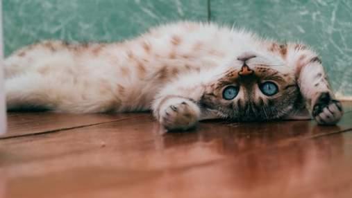 Коты табби – самый популярный цвет мурлык в мире