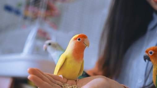 11 вещей, которые поймут только владельцы попугаев