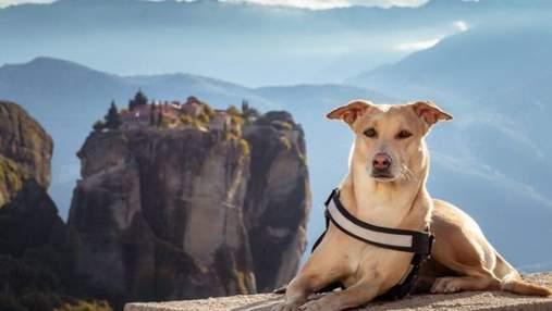 Громкий рекорд собаки-путешественницы из Киева: сколько стран она посетила