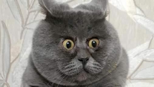 Всегда удивлен: у кота из России необычная деформация мордочки, которая напоминает Гарфилда