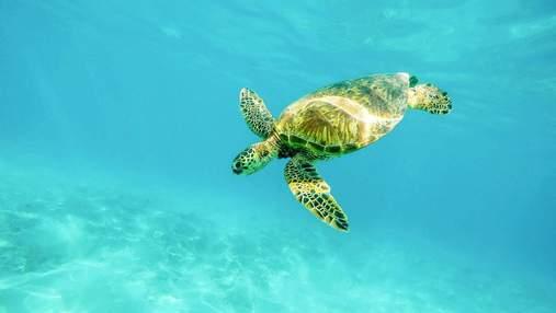 День морских черепах: малоизвестные факты о животных, которые могут исчезнуть