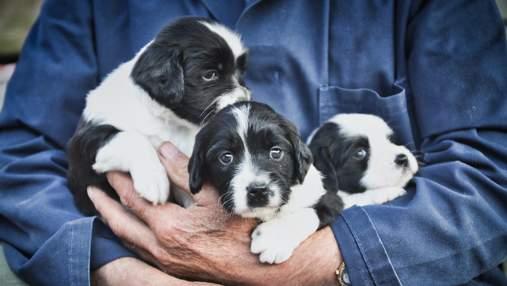 В Днепре спасли 6 щенков – невероятное видео