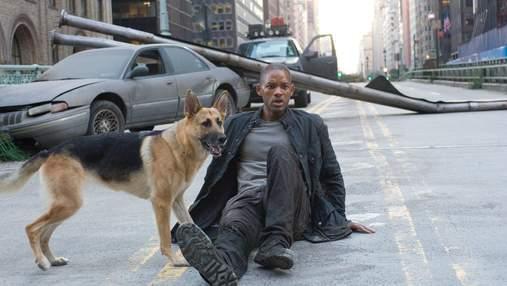 Что вы знаете о породах собак из кино: пройдите тест