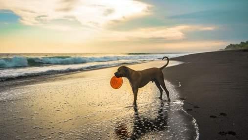 10 самых игривых пород собак: описание и фото
