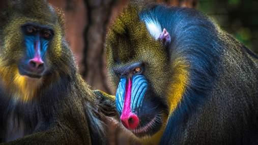 Радужная природа: как выглядят самые яркие животные в мире – фото