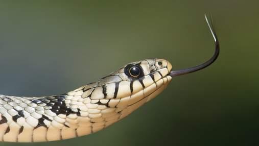 Осторожно змеи: что делать при укусе гадюки и как уберечься от этого