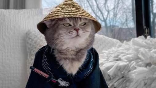 Від бездомного кота –до зірки інстаграму з ексклюзивними фото: неймовірна історія кота Бенсона