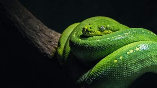 Всемирный день змей: 10 малоизвестных фактов об этих удивительных пресмыкающихся