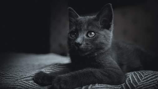 10 речей, що негативно впливають на життя котів