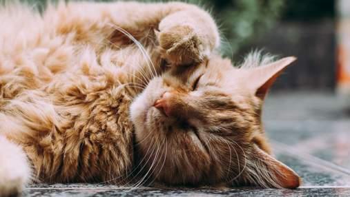 Як правильно гладити кота і яких місць краще уникати: інструкція для власників