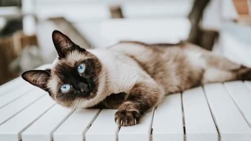Породи котів, які живуть найдовше: фото і опис