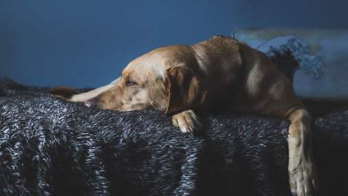 10 порід собак, які найбільше страждають від розлуки з господарем