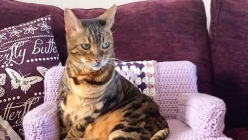 Олімпійський чемпіон власноруч зв'язав диванчик для своїх котів