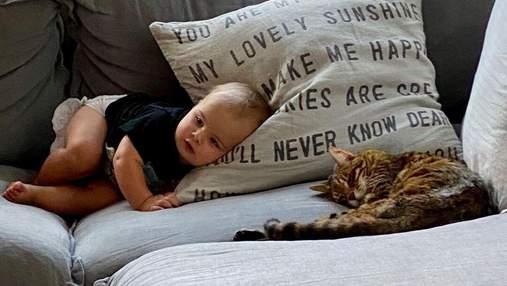 Кот-старожил дома и младенец: пример взаимной любви