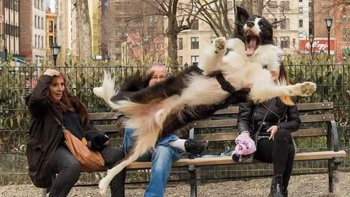 Эмоциональные хвостатые: 10 кадров собак, которые сделают ваш день