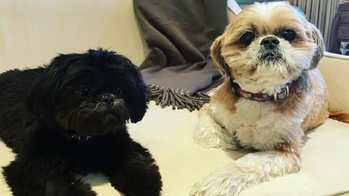 Келли Рипа и Марк Консуэлос усыновили милую собаку из приюта
