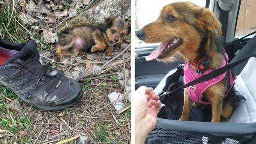 Щенок жил в выброшенном ботинке: чем закончилась щемящая история – фото