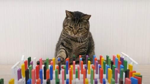 Кошки, которые наблюдают за домино, стали хитом сети: захватывающее видео
