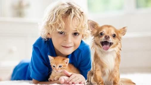 6 способов защитить домашних любимцев от блох: плюсы и минусы