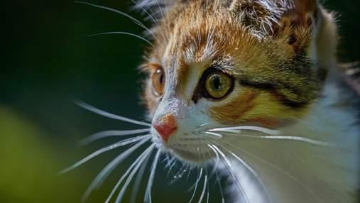 Собаки или переезд в новый дом: чего больше всего боятся коты