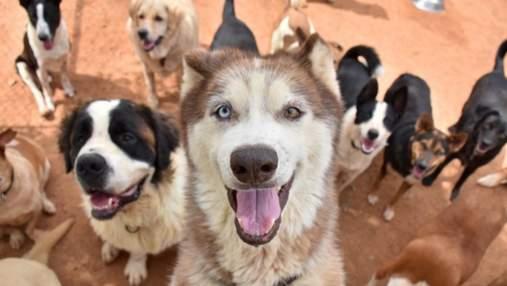 Стали коротшими лапи й збільшилася щелепа: як відомі породи собак змінилися за останні 100 років
