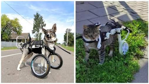 Второй шанс на жизнь: украинская компания делает инвалидные коляски для травмированных животных