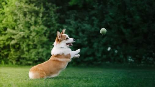 Какие породы собак считаются самыми игривыми: результаты исследования