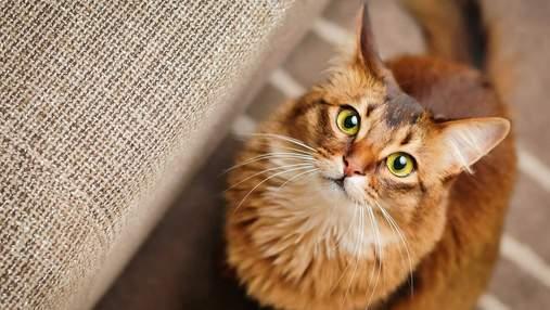 """""""Почему кот смотрит на меня"""": как понять домашнего любимца по языку тела"""