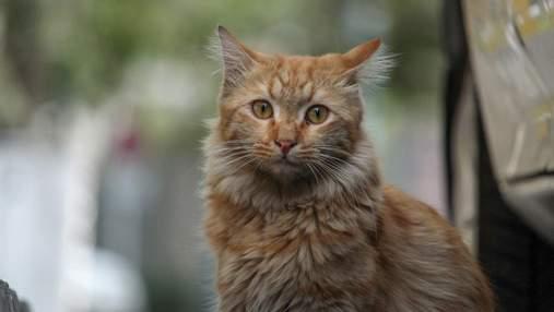 Ученые рассказали, почему полезно держать дома кота