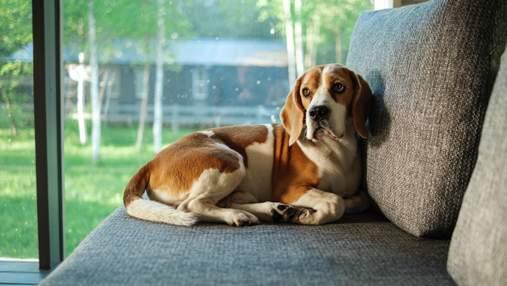 Что нужно знать, выбирая собаку из приюта: важные советы и предостережения