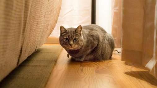 Как помочь коту приспособиться в новом доме после переезда
