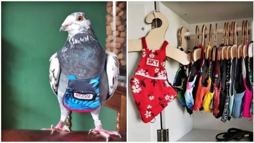 Роскошь для птиц: женщина тратит более 5000 долларов в год на костюмы для голубей