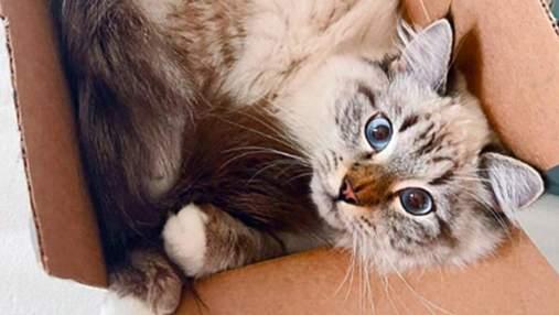 Коты в коробках, которые стали звездами инстаграма: 10 веселых фото